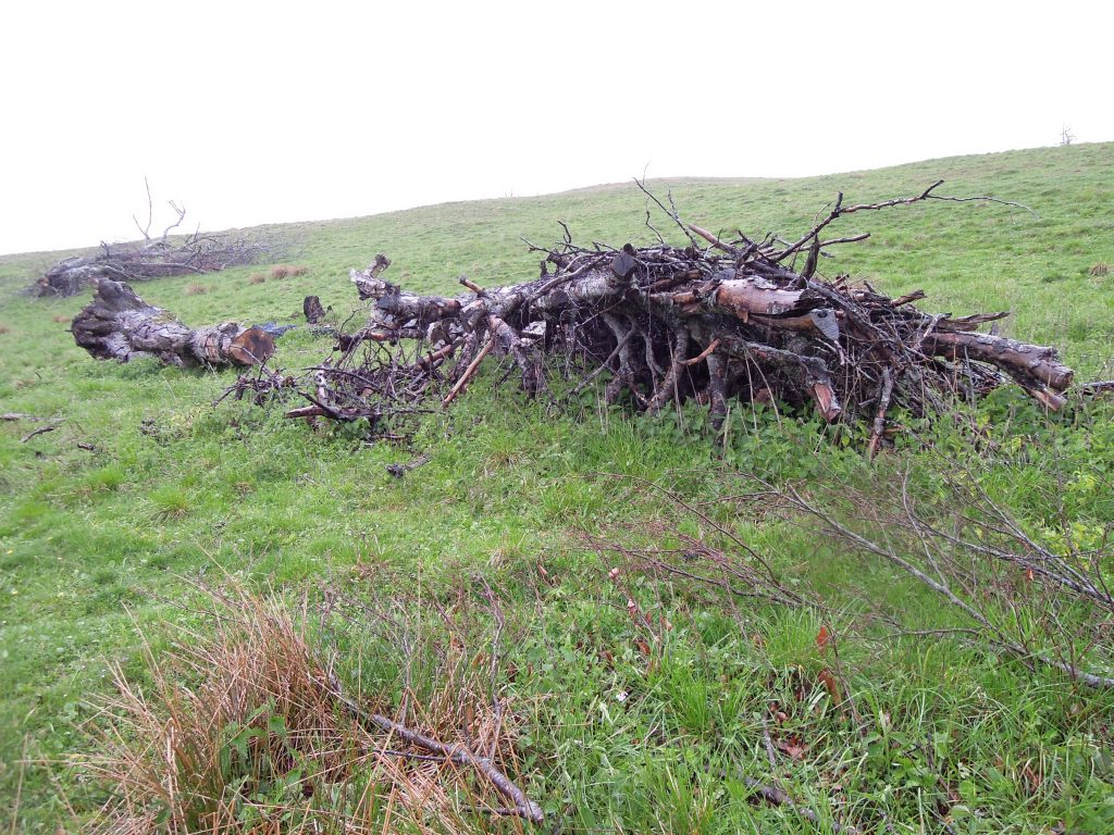 The aftermath of European land cleansing in Vrancea county, Romania. The trees and other dense vegetation have been cut to ensure that the land qualifies for farm subsidies.