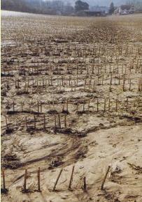 Soil erosion in a maize field. Photo: Defra