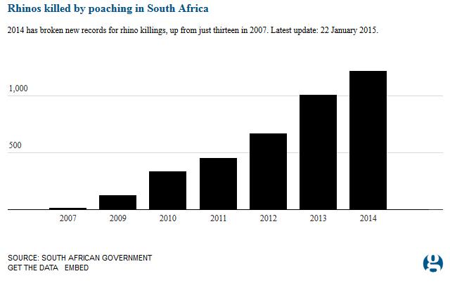 rhino poaching trend