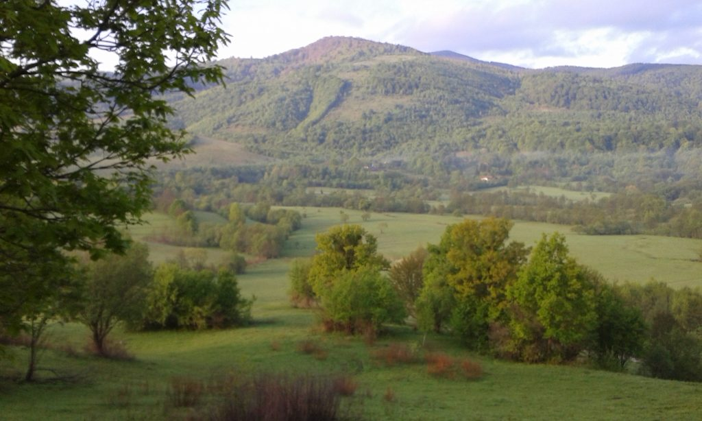 """Wood pastures in the Lupului Valley, Romania. Many of the trees and other rich wildlife habitats here are classified as """"ineligible features"""", which need to be destroyed if farmers are to claim subsidies for the land on which they grow."""